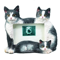 Frame - Black and White Cats (Large)